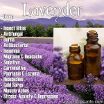 Essential Oil Of The Day: Lavender