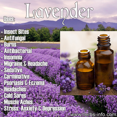 Uses Of Lavender