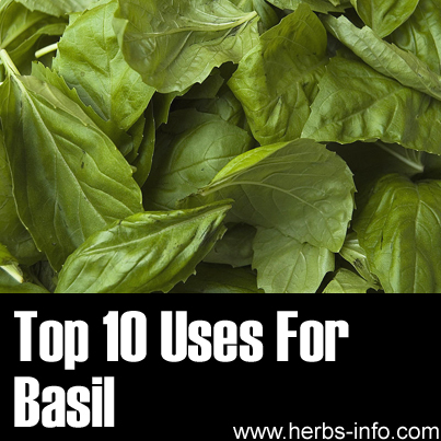 Top 10 Uses For Basil