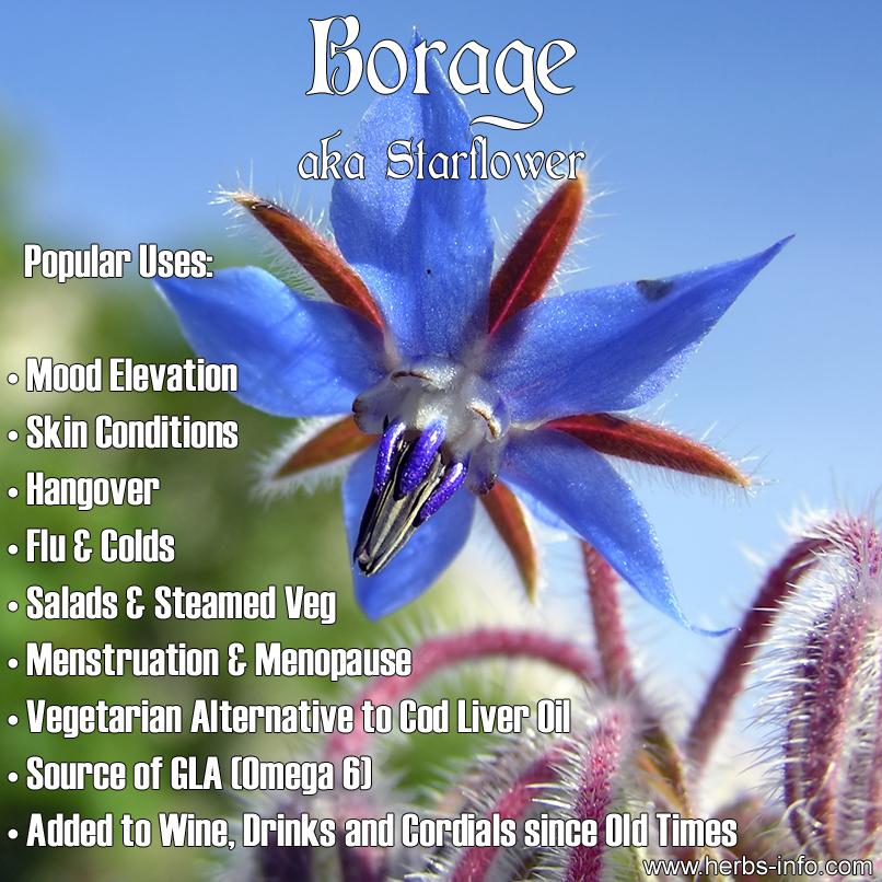 borage-starflower