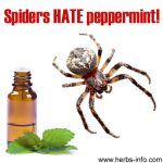 Spiders Hate Peppermint, Essential Oils As Insecticides And Other Curious Tales…