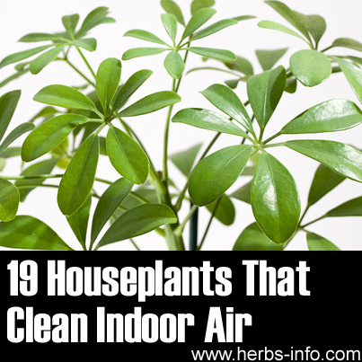 Nasa houseplants clean air pics about space for Nasa indoor plant list