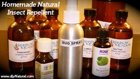 Homemade Natural Insect Repellent