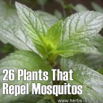 26 Plants That Repel Mosquitos