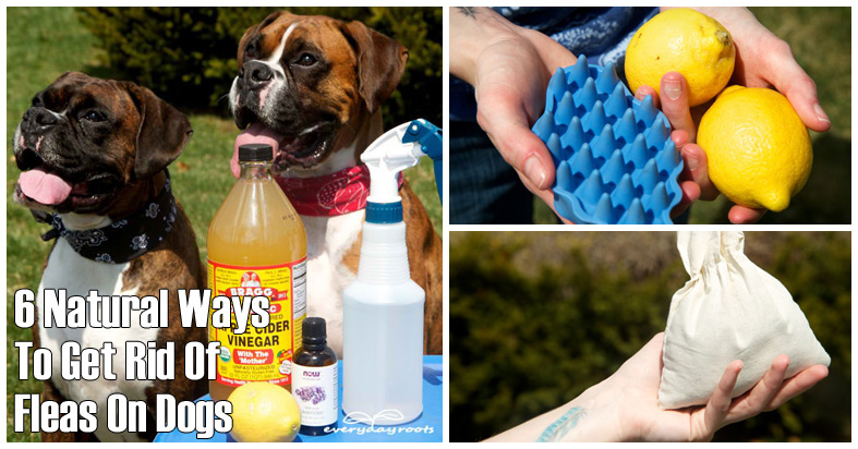 6 natural ways to ged rid of fleas on dogs herbs info. Black Bedroom Furniture Sets. Home Design Ideas