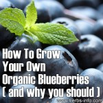 How To Grow Your Own Organic Blueberries (And Why You Should)