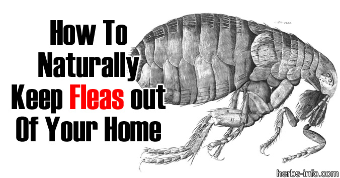 How To Get Fleas Out Of House 28 Images Natural Ways To Kill Fleas In Your Carpet Www