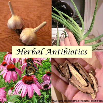 Top 15 Herbal Antibiotics