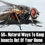 50+ Natural Ways To Keep Insects Out Of Your Home