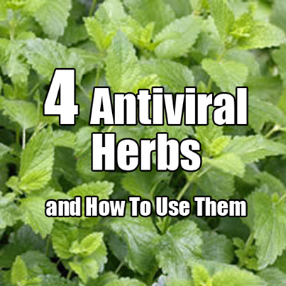 4 Antiviral Herbs and How To use Them