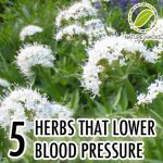 5 Herbs That Lower Blood Pressure