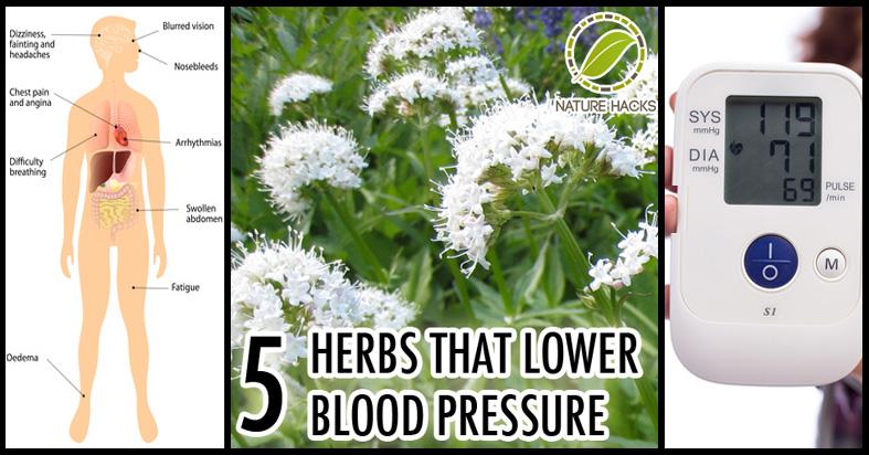herbs for lowering blood pressure