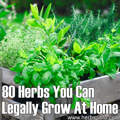 80 Herbs You Can Legally Grow at Home