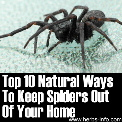 How to lower uric acid fast naturally heat or ice for How to keep spiders out of the house