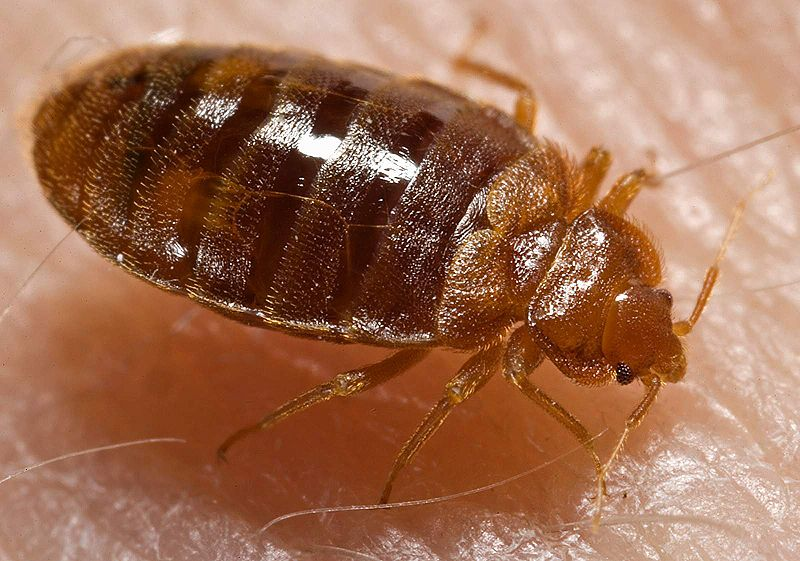 Top 17 Natural Ways To Get Rid Of Bedbugs (And Prevent Infestation)
