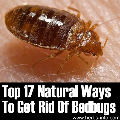 Top 17 Natural Remedies For Bedbugs