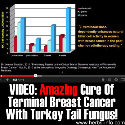 Amazing Cure Of Terminal Breast Cancer With Turkey Tail Fungus