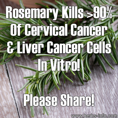 Rosemary Kills Over 90% Of Cervical Cancer & Liver Cancer Cells In Vitro