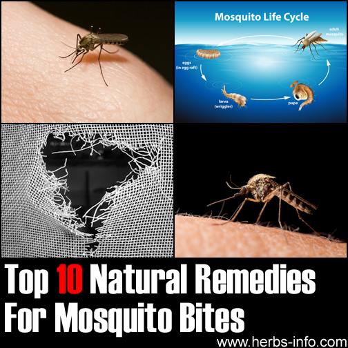 Effective Home Remes For Mosquito Bites