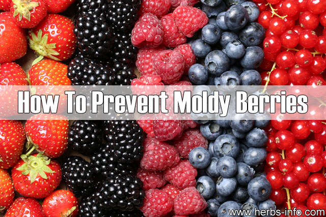 How To Prevent Moldy Berries