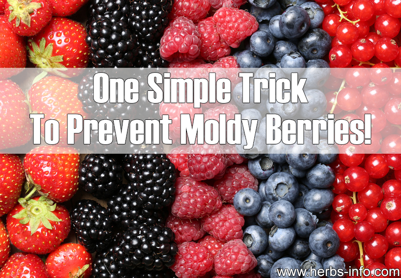 One Simple Trick To Prevent Moldy Berries