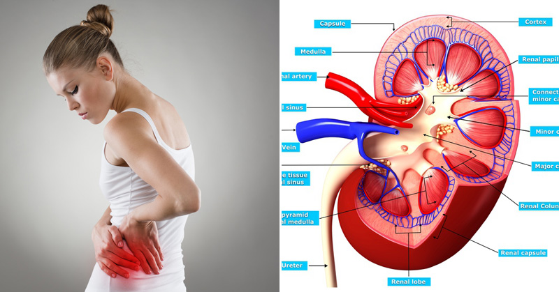 12 Symptoms of Kidney Disease That You Must Know