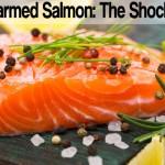 Wild vs. Farmed Salmon – The Shocking Truth