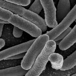 Gut Bacteria May Influence Mental Health in Humans