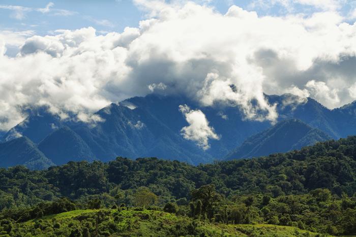 Amazon Tribe Creates 500-Page Traditional Medicine Encyclopedia