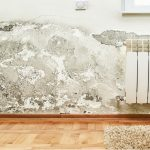 The Hazards Of Toxic Mold And Mold-Related Illness