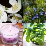 List Of Plants Found By NASA To Purify Indoor Air Naturally Plus 8 Top Aromatic Indoor Plants