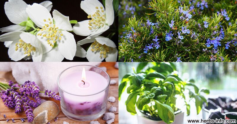 List Of Plants Found By NASA To Purify Indoor Air Plus 8 Top Aromatic Indoor Plants
