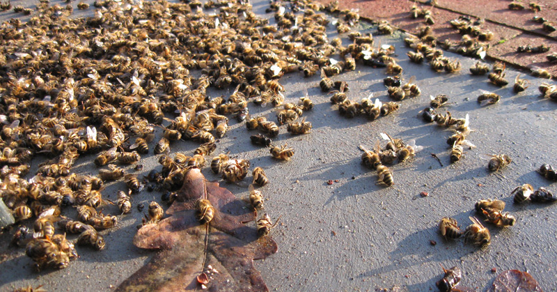 Alarm As 44% Of Bee Colonies Reported DEAD In ONE Year