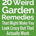 20 Weird Gardening Hacks That Might Make You Look Crazy But That Actually Work