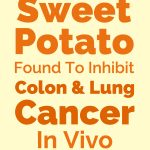 Sweet Potato Found To Inhibit Colon & Lung Cancer In Vivo