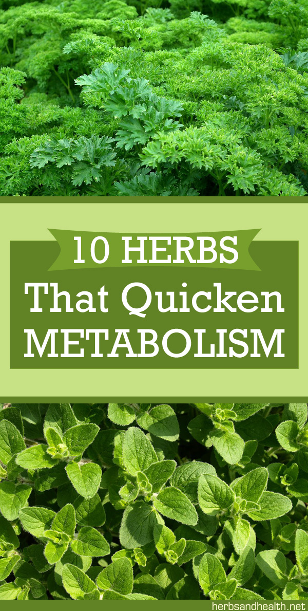 10 Herbs That Quicken Metabolism