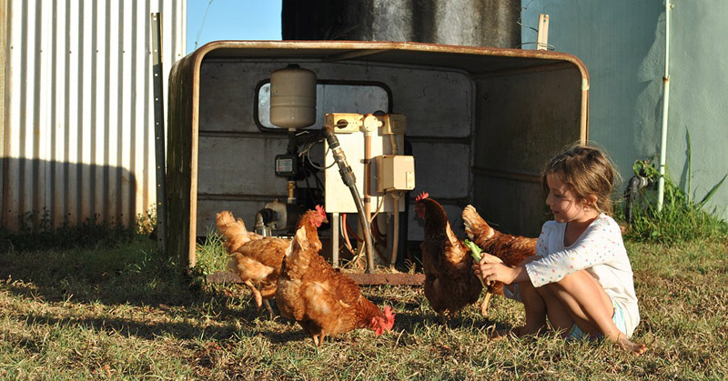 Exposure To Farm Animals Protects Farm Children From Asthma, Researchers Find