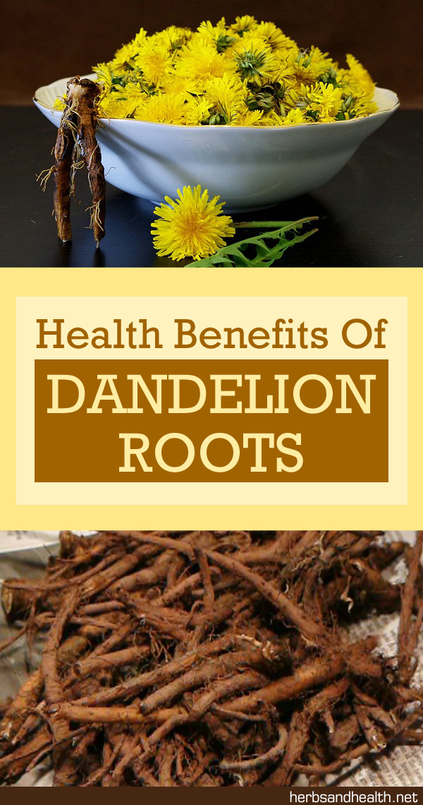 Amazing Health Benefits Of Dandelion Root