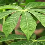 Study: 28,187 Plant Species Used As Medicines Throughout The World