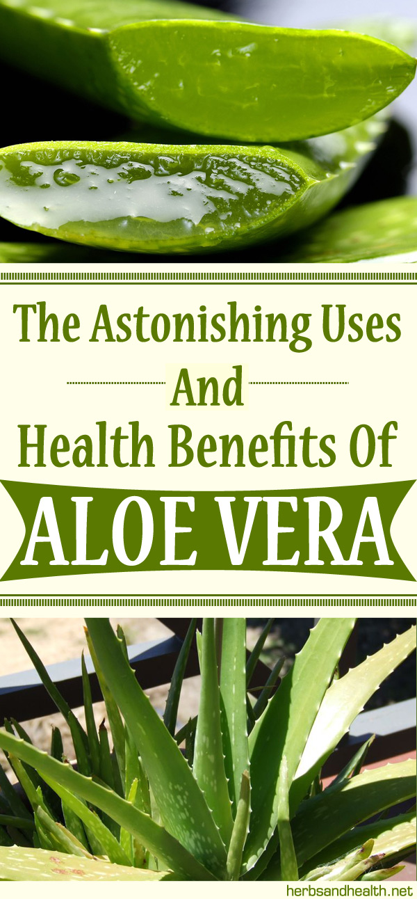 The Astonishing Uses And Health Benefits Of Aloe Vera