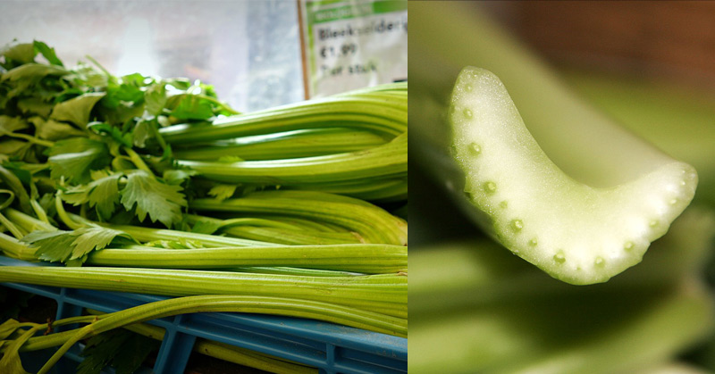 This Is What Happens When You Drink Celery Juice For One Month
