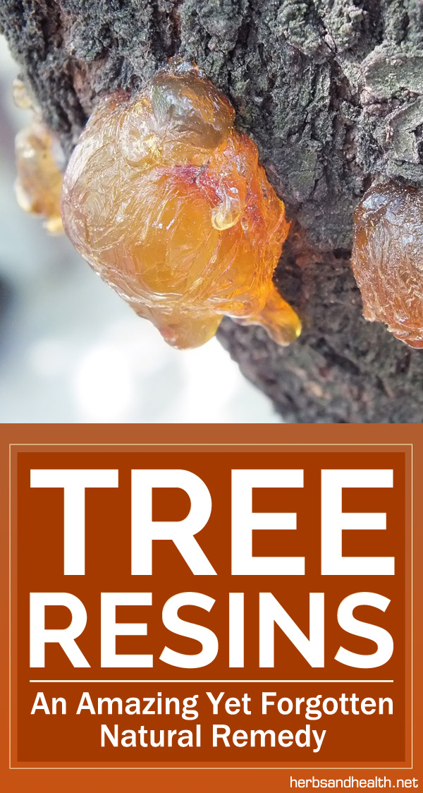 Tree Resins - An Amazing Yet Forgotten Natural Remedy