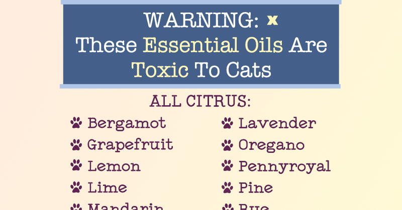 Essential Oils Dogs And Cat Toxic
