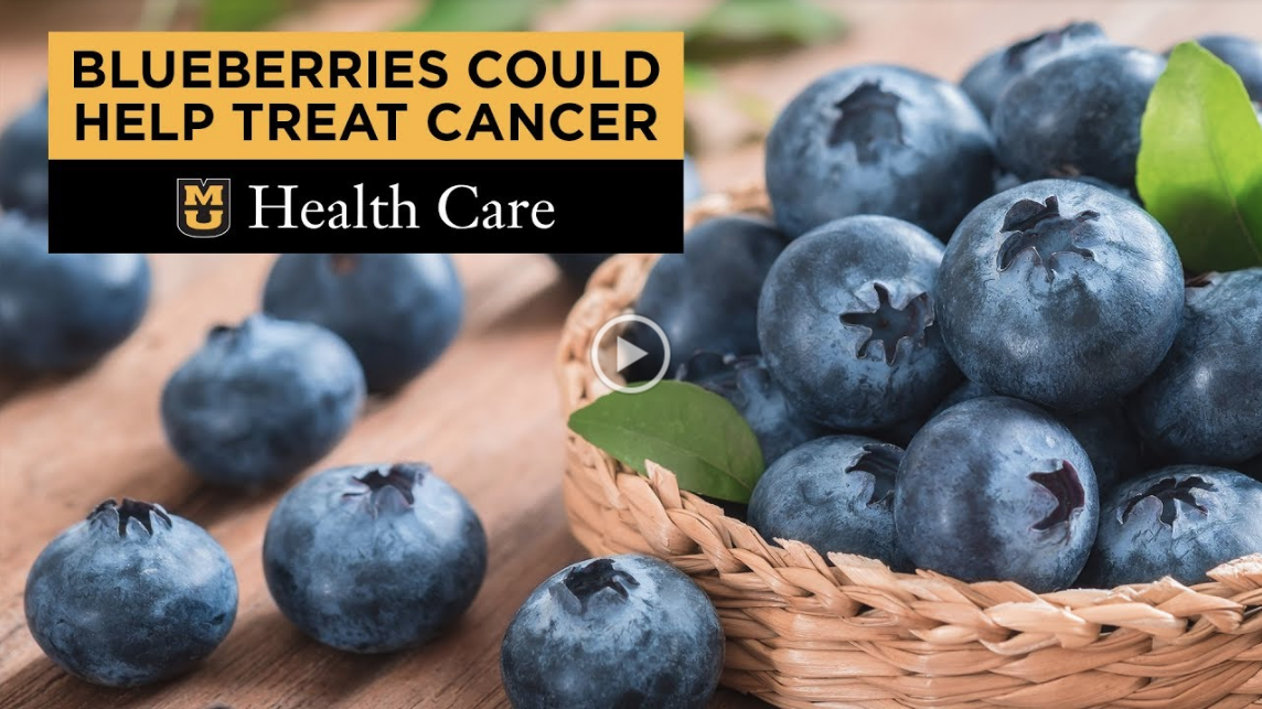 Science - Blueberries Demonstrated To Increase Effectiveness Of Cervical Cancer Therapy