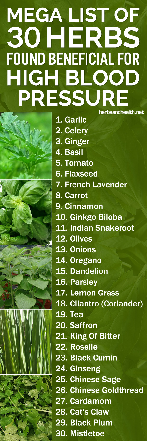 Mega List Of 30 Herbs Found Beneficial For High Blood Pressure