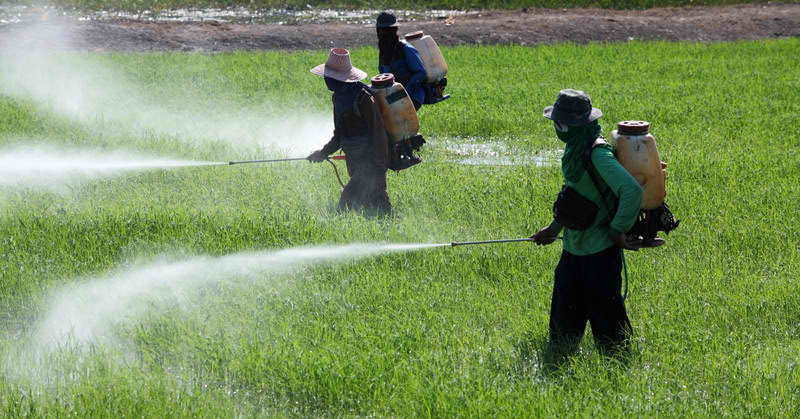 New UN Report Estimates Pesticides Kill 200,000 People Per Year