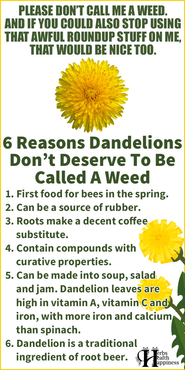 6 Reasons Dandelions Don't Deserve To Be Called A Weed