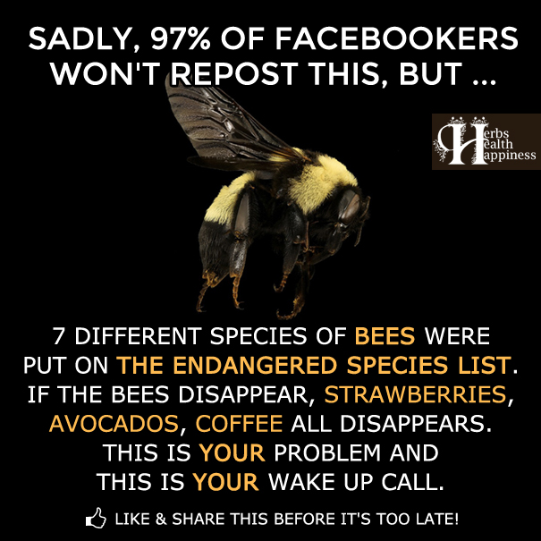 7 Different Species Of Bees