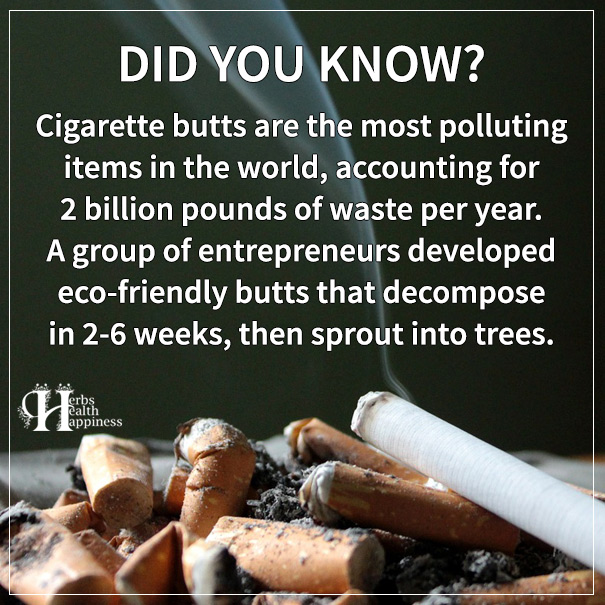 Cigarette Butts Are The Most Polluting