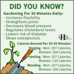 Gardening For 30 Minutes Daily